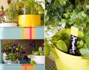 Яркий сад у вас дома